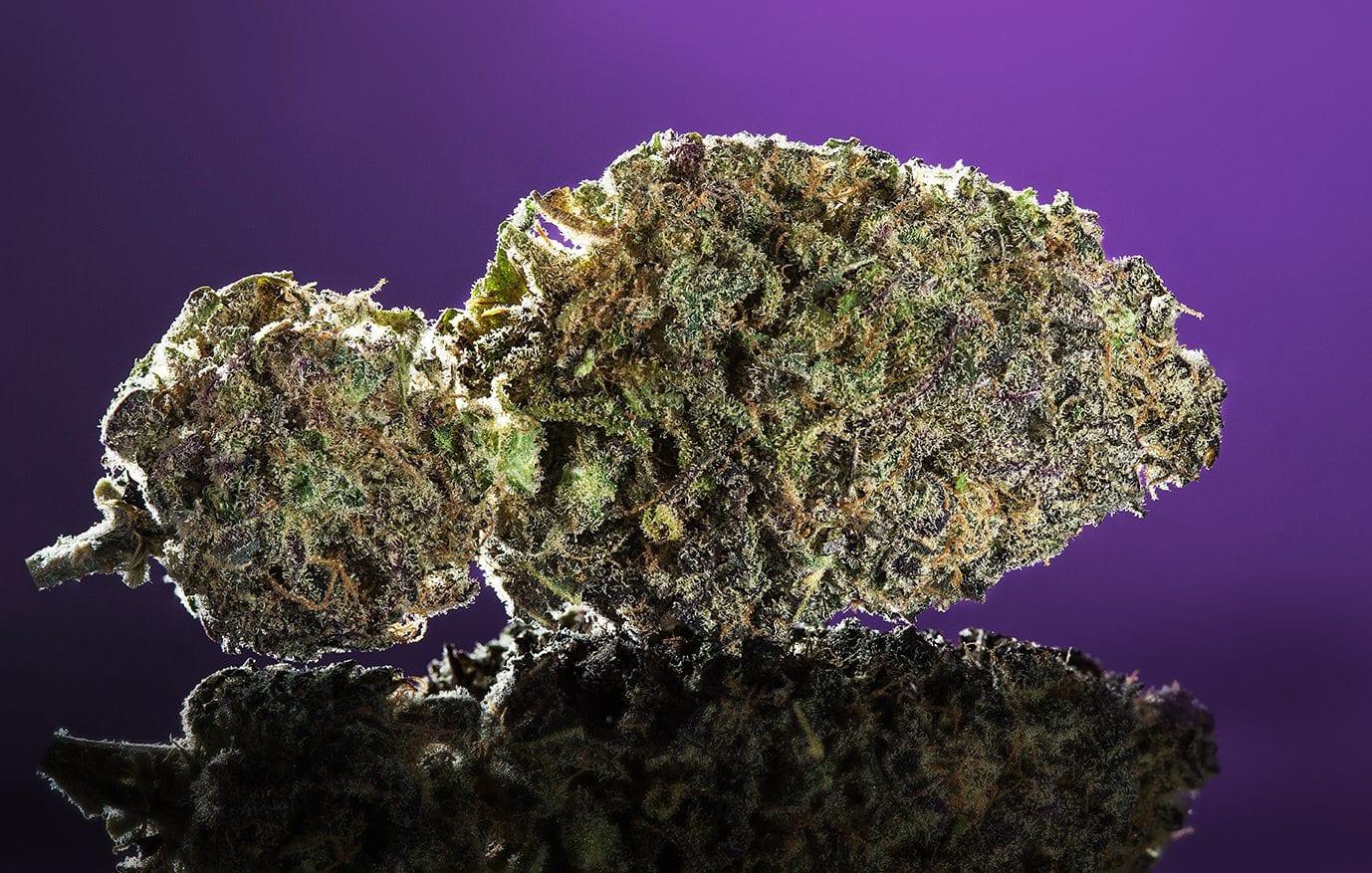 purple marijuana bud 28 - photo #4