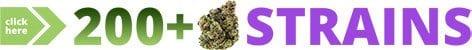 Denver Dispensary With 200 Strains Graphic